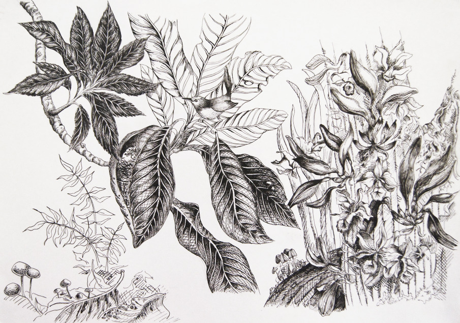 Basic Drawing Skills images